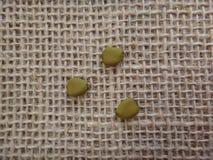 Dried seeds of petit flamboyant Stock Photo