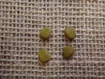 Dried seeds of petit flamboyant Royalty Free Stock Photos