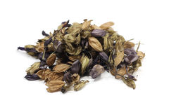 Dried seeds of purple salvia Stock Photo