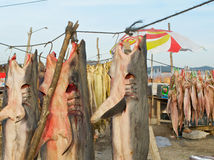 Dried sharks. Food is strange sometimes when it comes to fish Royalty Free Stock Photo