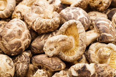 Dried shiitake Royalty Free Stock Image