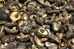 Dried shiitake mushroom Stock Photos