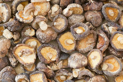 Dried shiitake mushroom Royalty Free Stock Photography