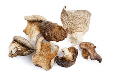 Dried shiitake mushrooms royalty free stock photography
