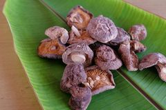 Dried shiitake mushrooms. Royalty Free Stock Photo