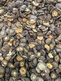 Dried shiitake mushrooms Royalty Free Stock Photo