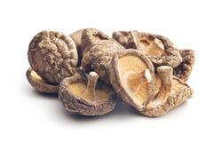 Dried shiitake mushrooms Royalty Free Stock Images