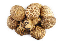 Dried shiitake mushrooms on white Royalty Free Stock Photography