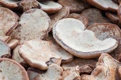 Dried Shiitake vegetable mushrooms for health Royalty Free Stock Photo