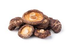 Dried shitake mushroom Stock Image