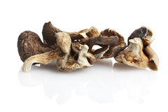 Dried shitake mushrooms Stock Image