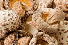 Dried Shitake Mushrooms (Lentinula edodes) Royalty Free Stock Image