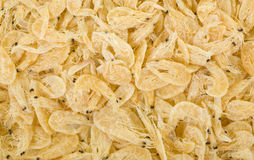 Dried Shrimp Background Stock Photography