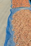 Dried shrimp, fisherman dry small shrimp for sell at fresh marke Royalty Free Stock Image