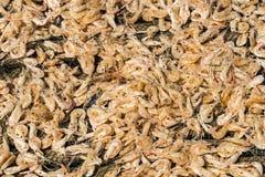 Dried shrimp Stock Photos