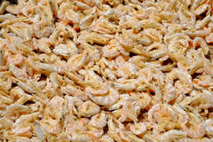 Dried shrimp Royalty Free Stock Images