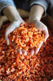 Dried shrimp prepared for cooking Stock Photo