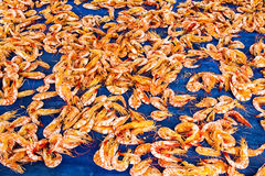 Dried shrimp  Preservation by the sun Stock Images