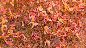 Dried shrimp on the salt. Royalty Free Stock Photo
