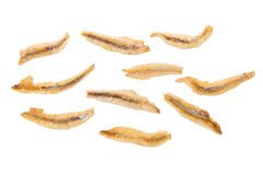 Dried Small fish anchovies and crispy Seafood isolated on white Stock Photo