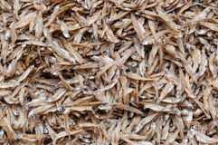 Dried Small fish Stock Photo