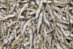 Dried small fish Stock Images