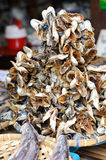 Dried Small fish used in Asian cuisine, Fish drying. Royalty Free Stock Photo