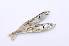Dried small fish Royalty Free Stock Image