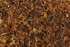 Dried smoking tobacco Stock Photography