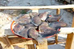 Dried Snake Skin Gourami fish on tray Royalty Free Stock Image