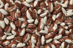 Dried snowcap beans Royalty Free Stock Photo