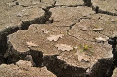 Dried soil Stock Image