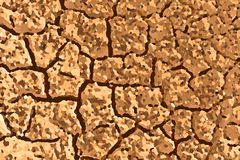 Dried soil background Stock Image