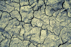 Dried soil Royalty Free Stock Image