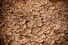 Dried soil with cracks reddish coloured object - stock photo royalty free stock photo