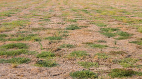 Dried Soil. With some green grass Royalty Free Stock Photos