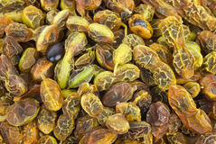 Dried sophora japonica  beans. Abstract background: Dried sophora japonica  beans Stock Images