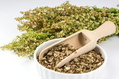 Dried sorrel in a white bowl. Bowl with dried sorrel and bunch of fresh sorrel Stock Image