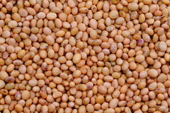Dried Soya Beans Stock Photography
