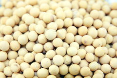 Dried Soybeans Stock Photo
