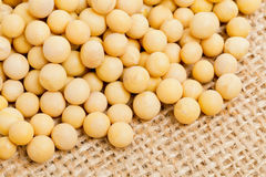 Dried soybeans on burlap Stock Images