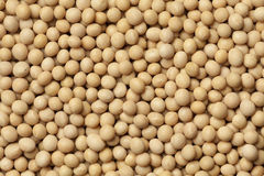 Dried soybeans Royalty Free Stock Image