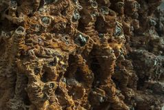 Dried and spent thornstone or saltworks stone with deposits of lime, magnesium, gypsum and coloring carbonates of iron and. Manganese on blackthorn bunch twigs royalty free stock photo