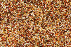 Dried spice mix background Royalty Free Stock Images