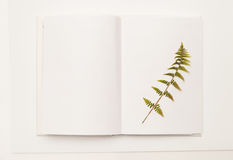 Dried sprig of fern in an open book on white stock image
