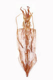 Dried squid. Dried squid isolated in white Royalty Free Stock Images