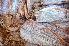 Dried squid. Stock Photos