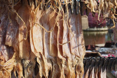 Dried squid. For food ingrediant Stock Images
