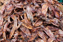 Dried squid Stock Images