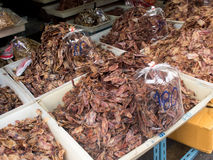 Dried Squid in a Sea Food Market, Thailand Stock Photography